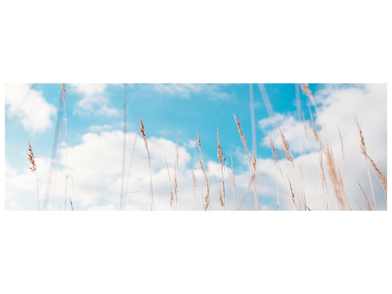 Panoramic Canvas Print Blades of grass in the sky