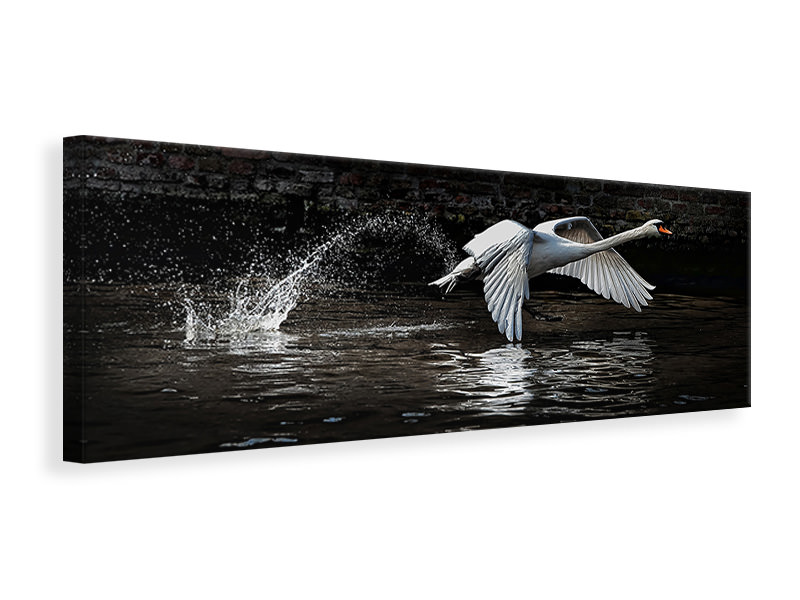 Panoramic Canvas Print Flying Swan