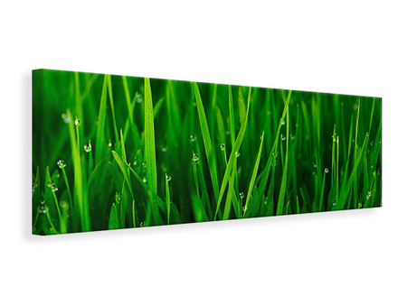 Panoramic Canvas Print Grass With Morning Dew