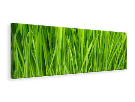 Panoramic Canvas Print Grass In Morning Dew