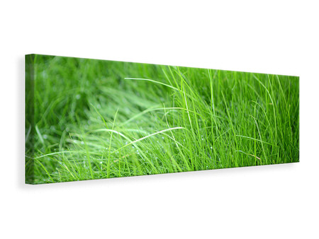 Panoramic Canvas Print Blades Of Grass