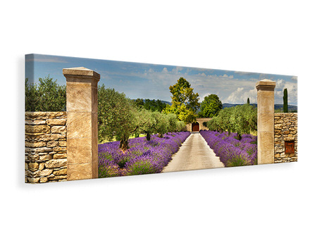 Panoramic Canvas Print Lavender Garden