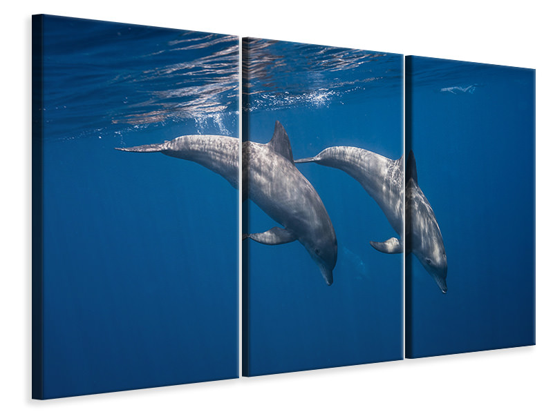 3 Piece Canvas Print Two Bottlenose Dolphins