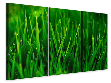 3 Piece Canvas Print Grass With Morning Dew