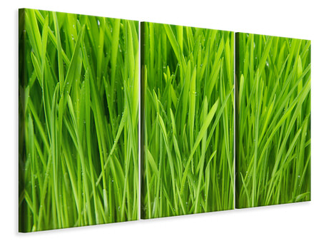 3 Piece Canvas Print Grass In Morning Dew
