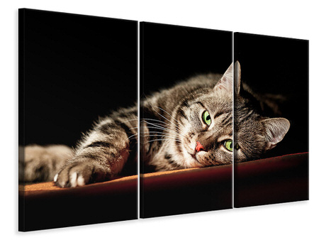 3 Piece Canvas Print Relaxed Cat