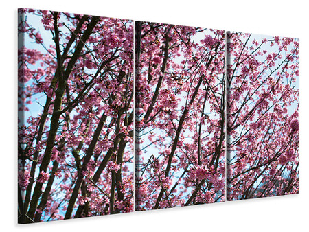 3 Piece Canvas Print Japanese Cherry Blossom