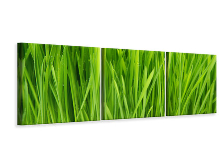 Panoramic 3 Piece Canvas Print Grass In Morning Dew