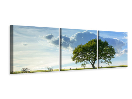 Panoramic 3 Piece Canvas Print Spring Tree