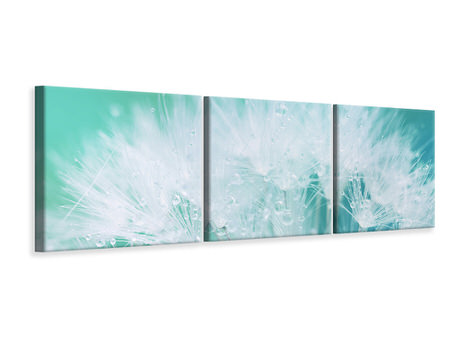 Panoramic 3 Piece Canvas Print Close Up Dandelion In Morning Dew