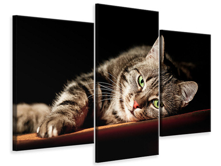 Modern 3 Piece Canvas Print Relaxed Cat