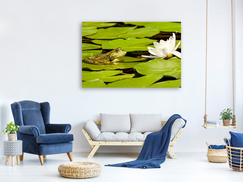 Canvas print The frog and the water lily