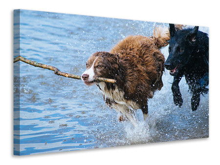 Canvas print Playing dogs