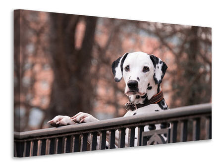 Canvas print Watchful Dalmatian