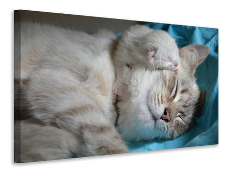 Canvas print Cats mom with baby