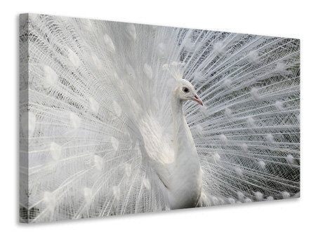Canvas print As White As Snow