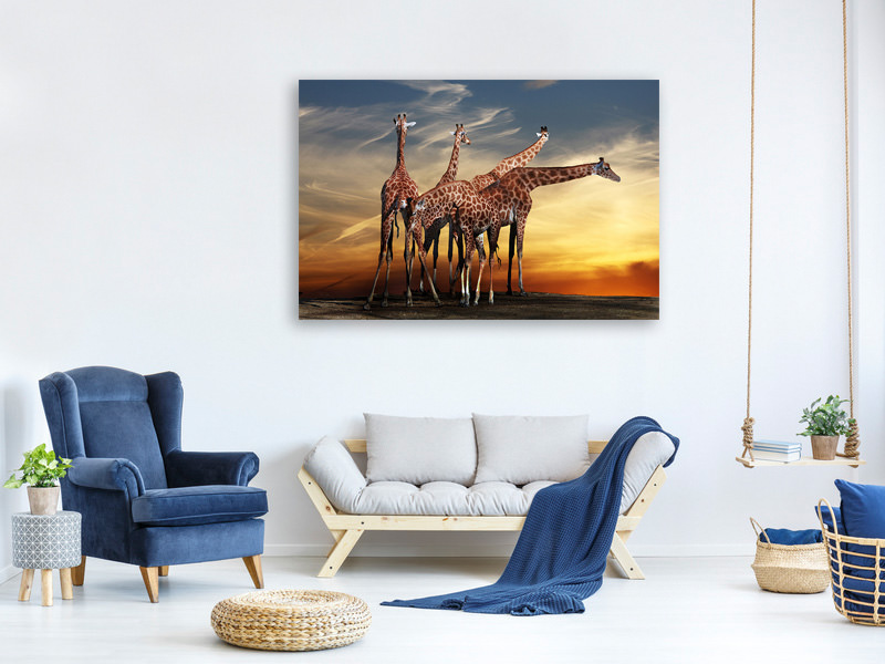 Canvas print Girafe at Sunset