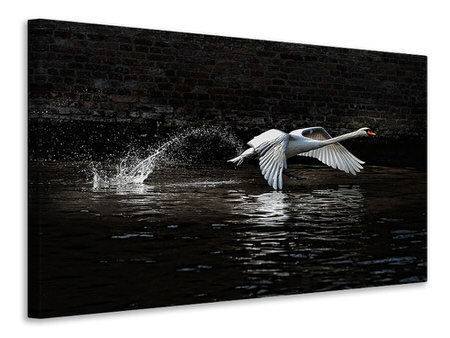 Canvas print Flying Swan
