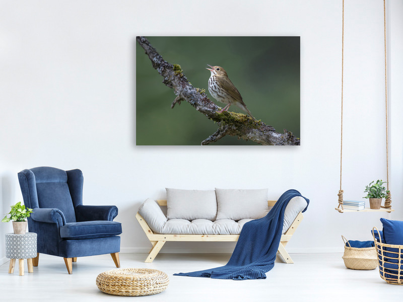 Canvas print In The Forest