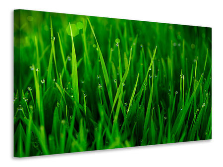 Canvas print Grass With Morning Dew