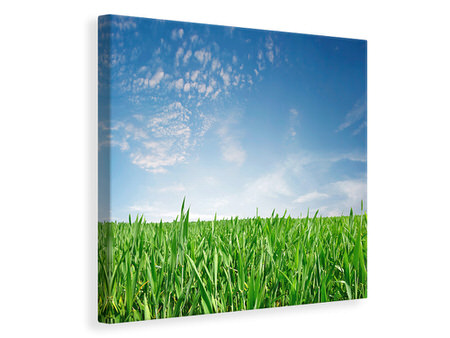 Canvas print The Grass