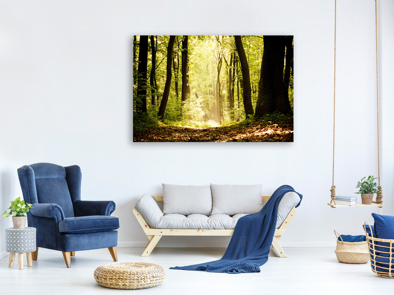 Canvas print Sunrise In The Forest