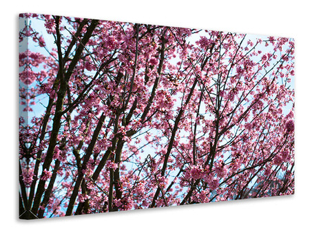 Canvas print Japanese Cherry Blossom