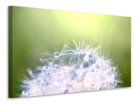 Canvas print Dandelion XL In Morning Dew