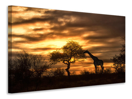 Canvas print African Dreams