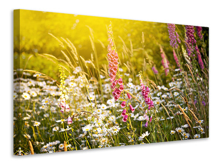 Canvas print Summer Flower Meadow