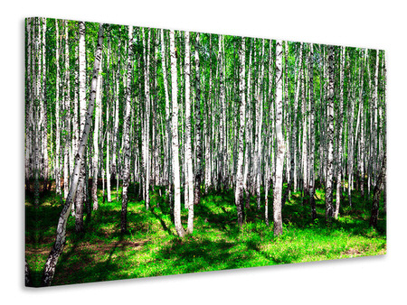 Canvas print Summerly Birch Forest