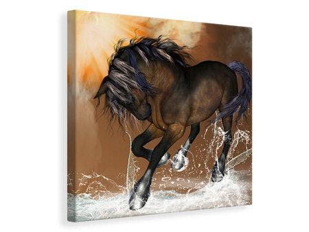Canvas print Black Beauty