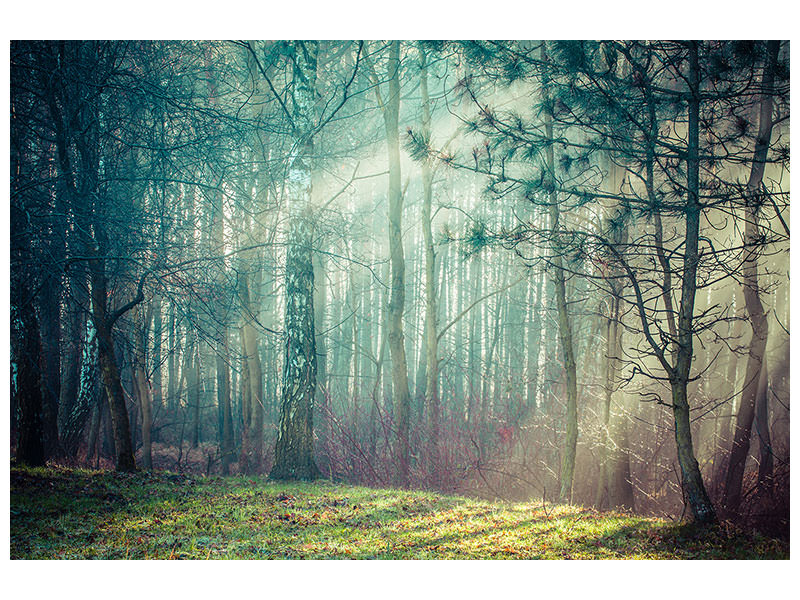 Canvas print Pinewood