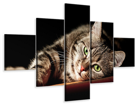 5 Piece Canvas Print Relaxed Cat